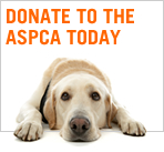 ASPCA